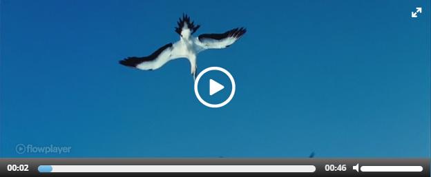 Воспроизведение видео в плагине Easy Video Player